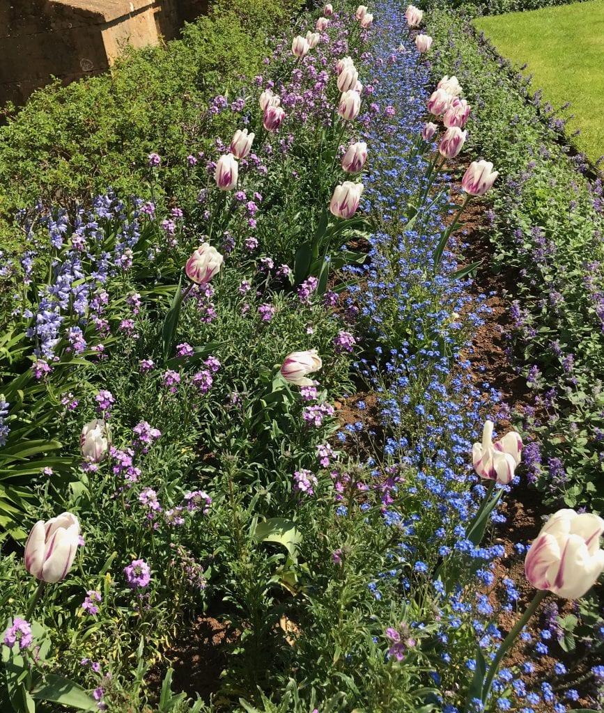 Garden Design Idea. Plant with blue companion plants.