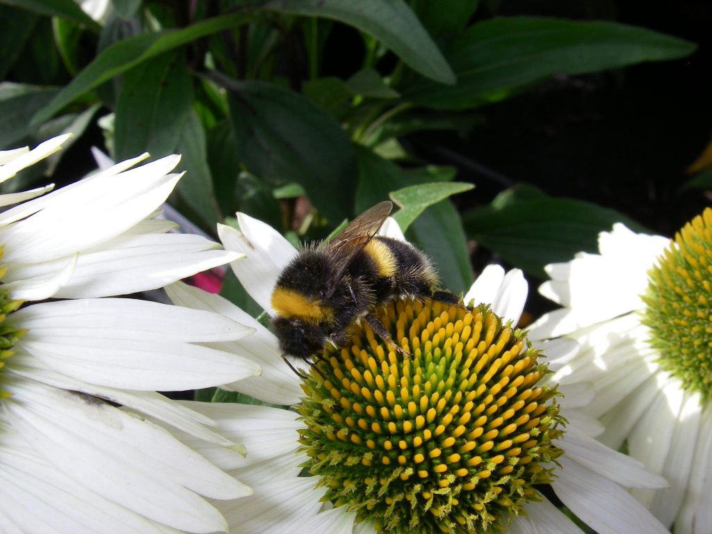 Neonicotinoid Pesticides Banned by Bunnings and EU due to harm to bees.