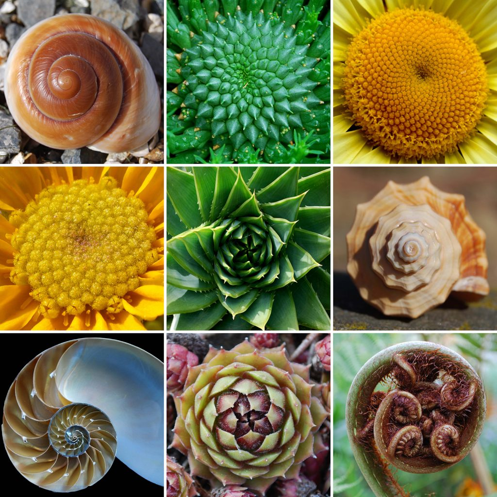 Bromeliads like some other members of the natural world, follow the Fibonacci series.