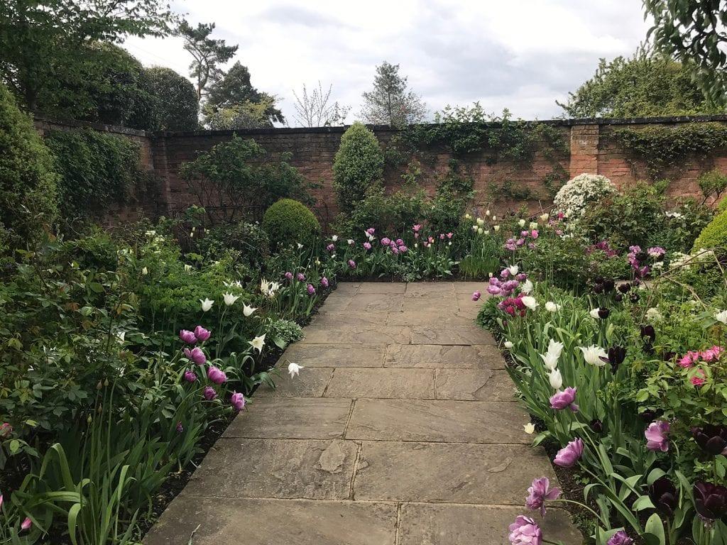 Tulips along the edge of a garden path.