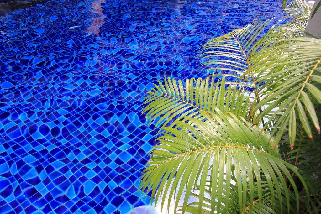 (Howea fosteriana) Kentia Palm by a swimming pool.
