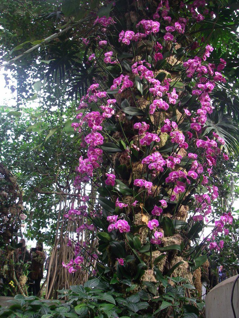 Orchid vertical gardens ideas. - Kew Gardens