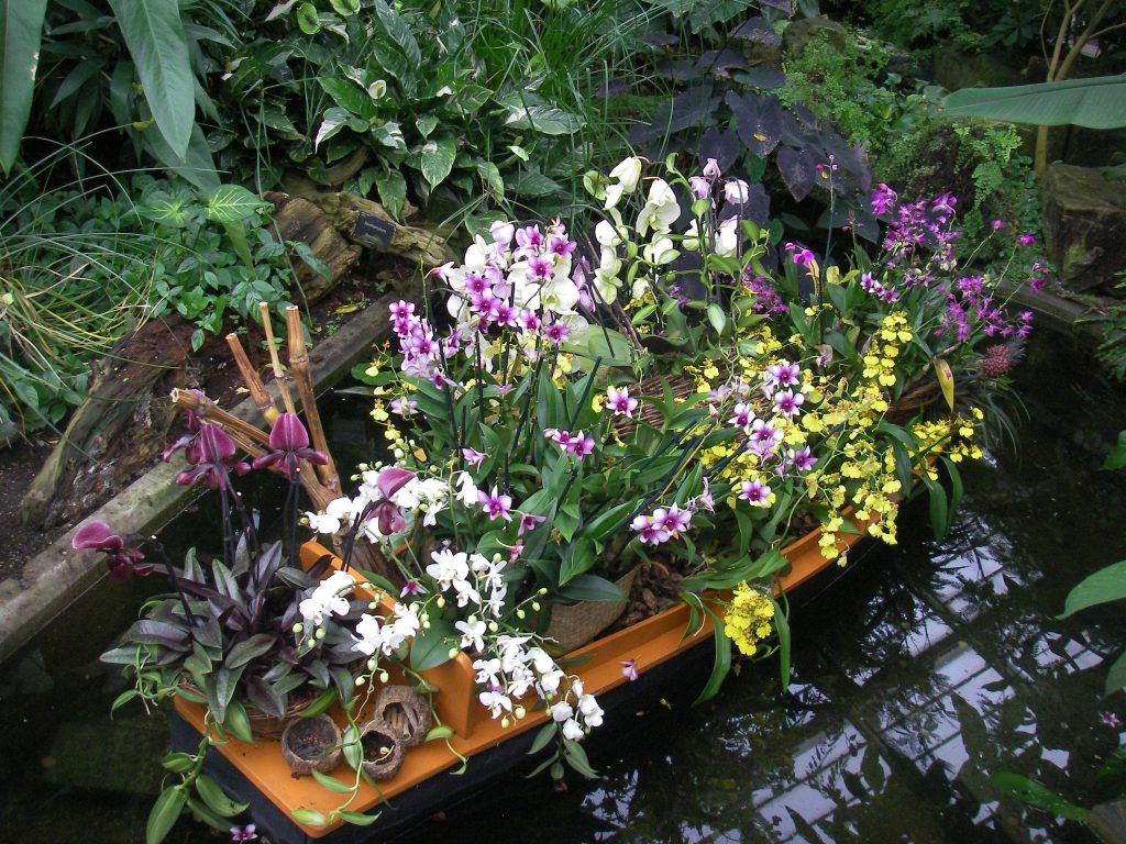 Orchids in a Banana boat - Kew Gardens