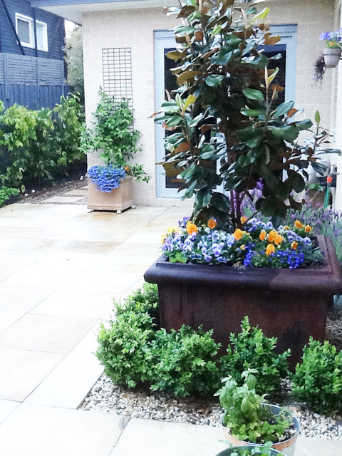 Magnolia in a raised pot. This courtyard is a backyard designed for a dog.