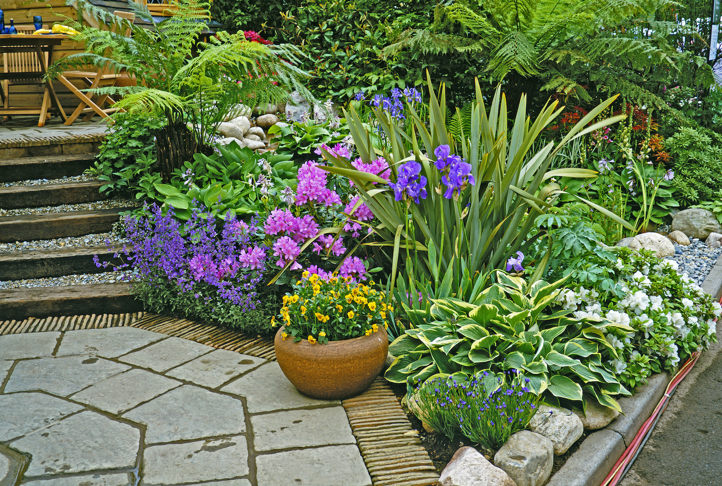 Dicksonia Antactica with hostas, azaleas and irises.