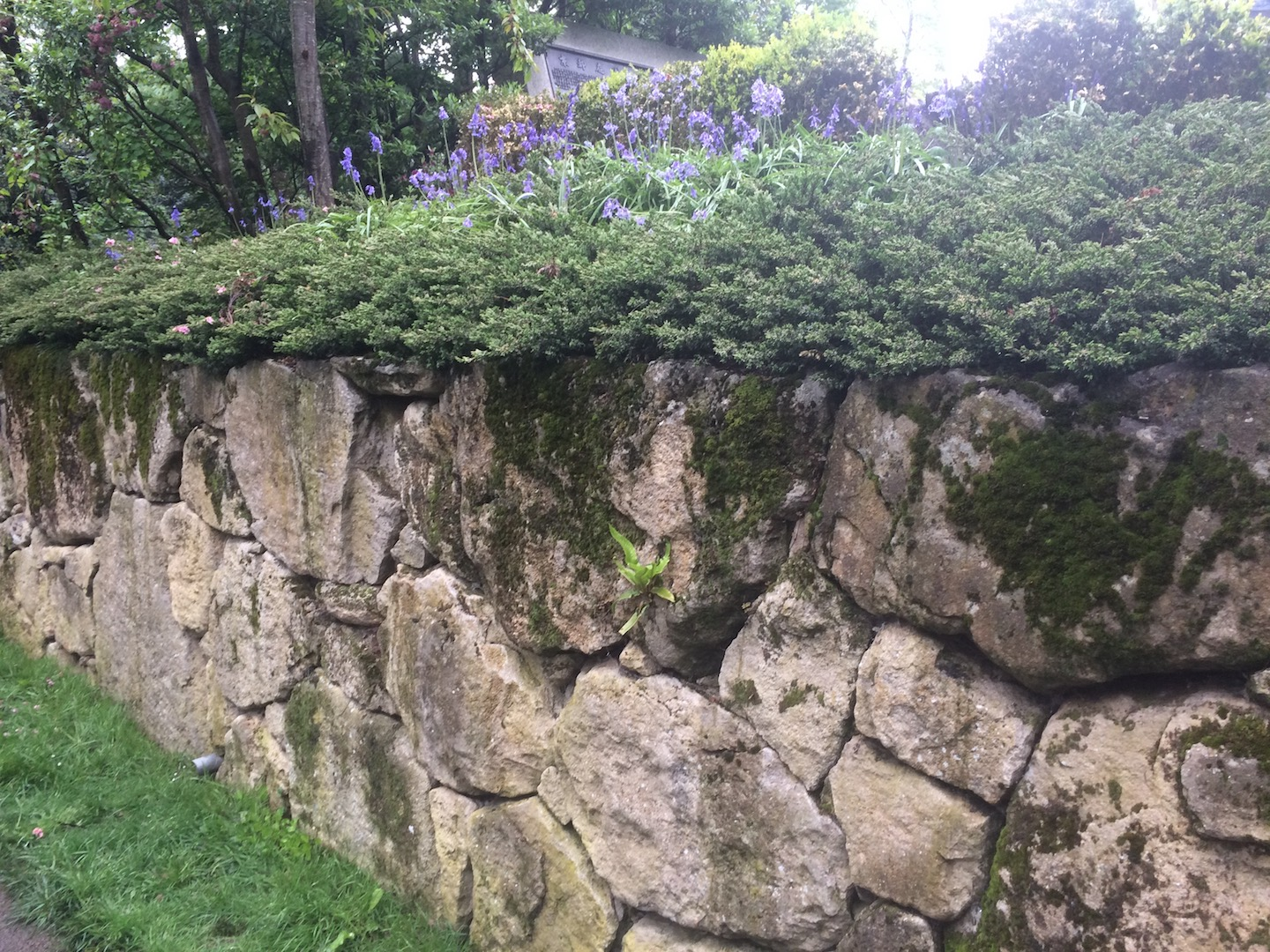 A mossy stone wall with borders and blue flowers.