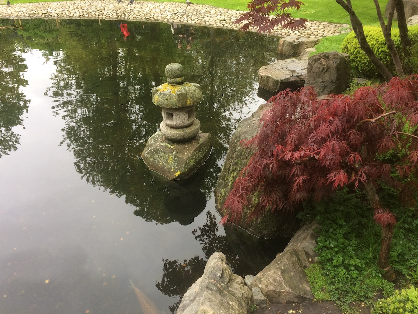 Koi fish swim around a stone lantern on a stone in a tranquil garden Pond. Water features are a often a big part of Japanese garden design.