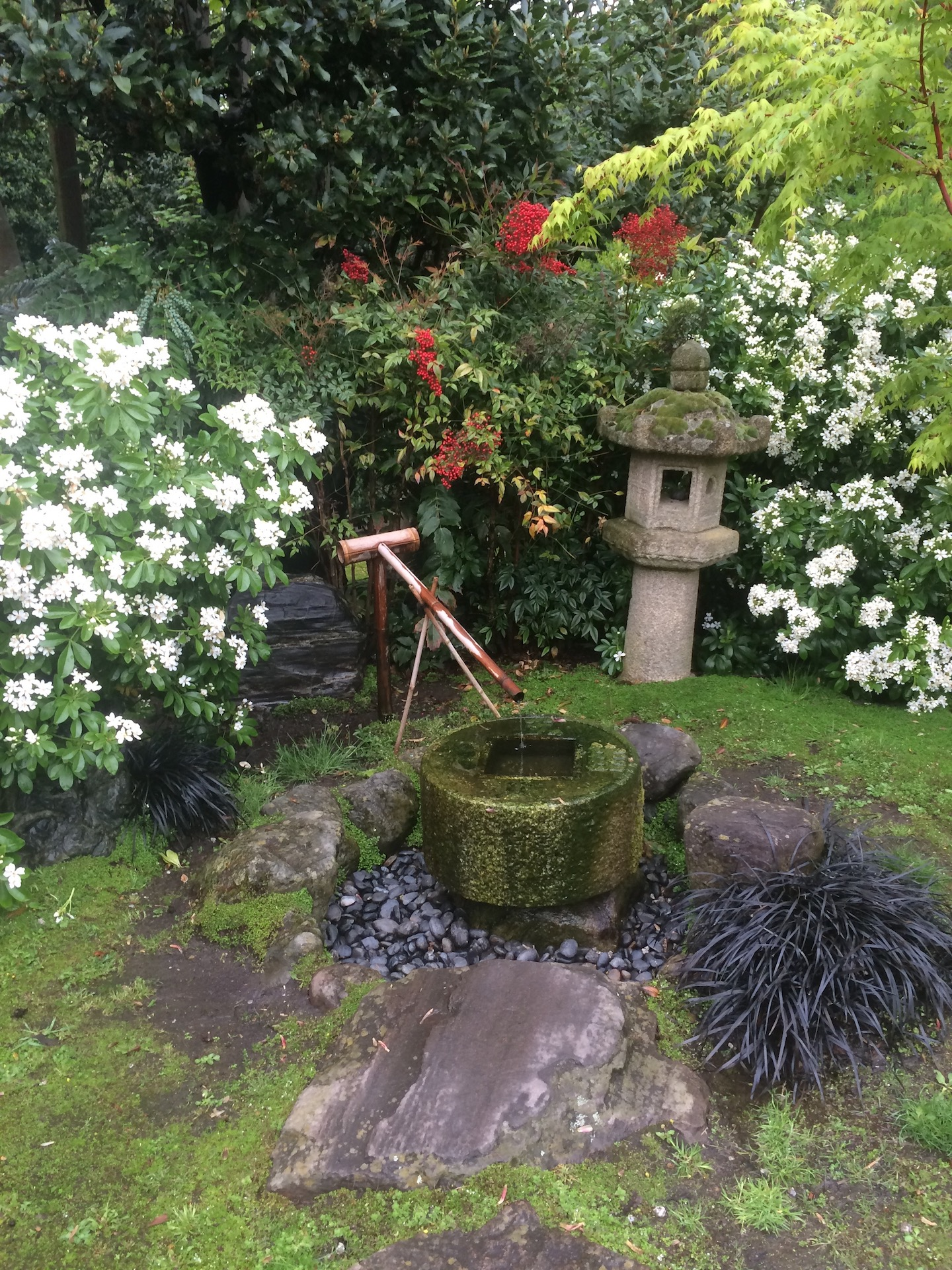 Stone water feature in the style of a Ryoan Ji temple with rounded river pebbles a stone lantern. Fantastic use of foliage colours with white flowers.