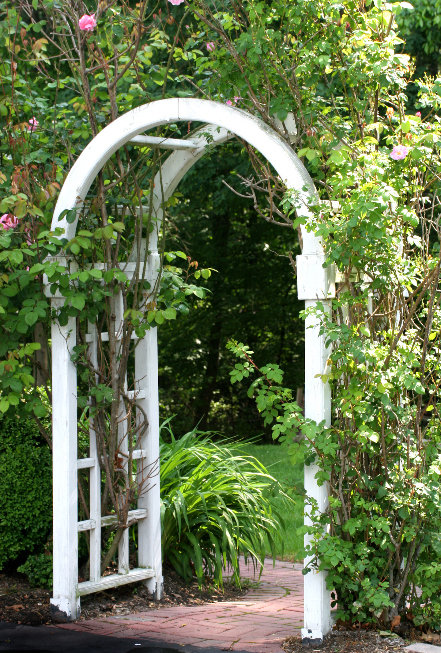 Garden Arbor or arch with climbing plants.