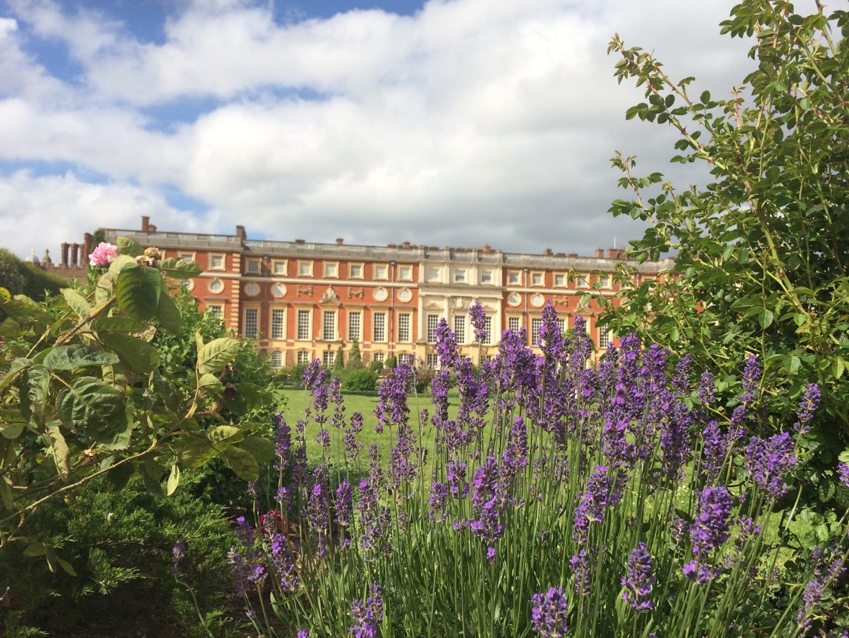 Hampton Court Palace behind lavender plants