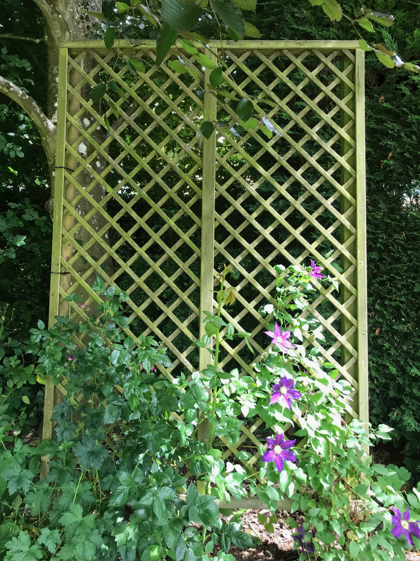 Trellis can be used to disguise parts of the garden.