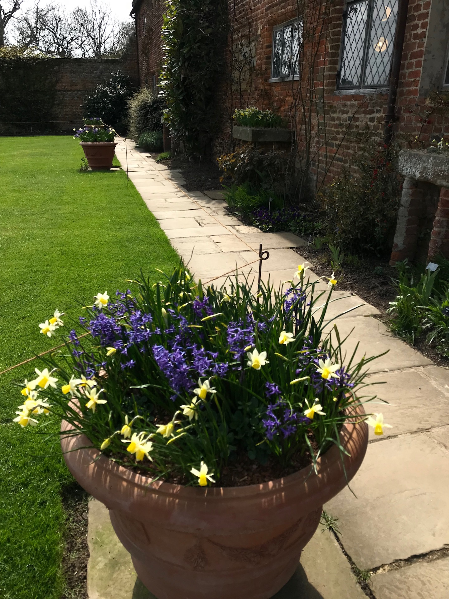 Classic English Garden Design. Garden Pots and climbing plants on a red brick wall. Good use of colour with the yellow and blues in the planter pots.
