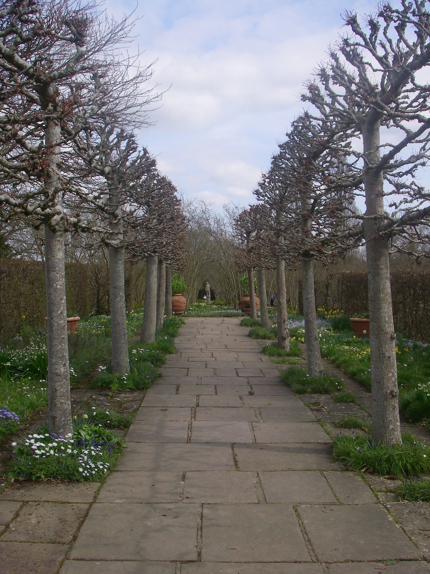 Lime Walk and Paving with pleached pruning in early Spring. Classic English Garden Design.