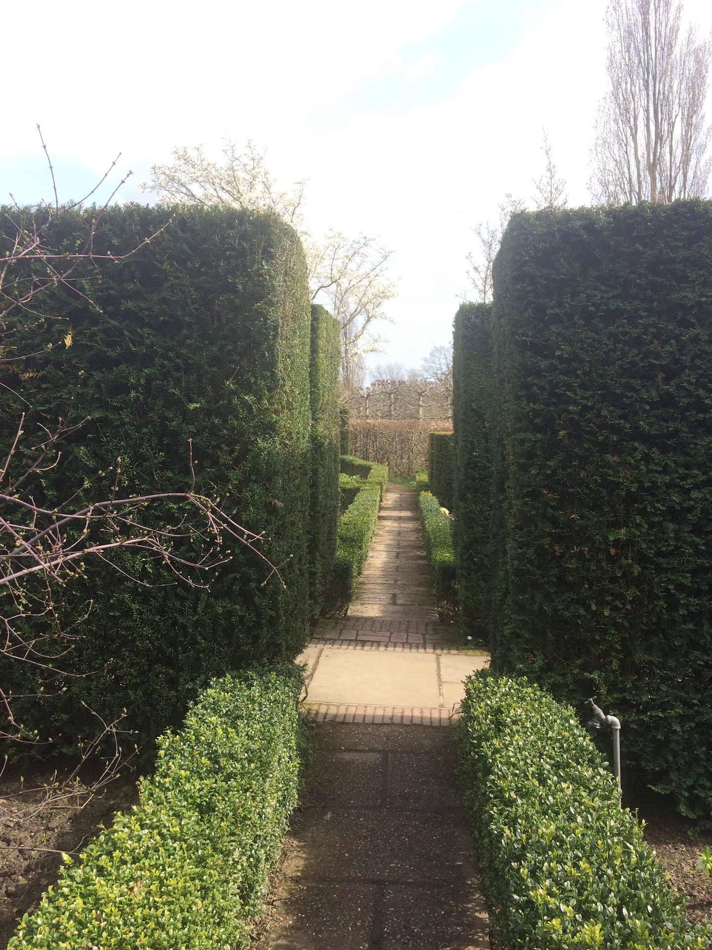 Yews and box hedges. Classic English Garden Design.