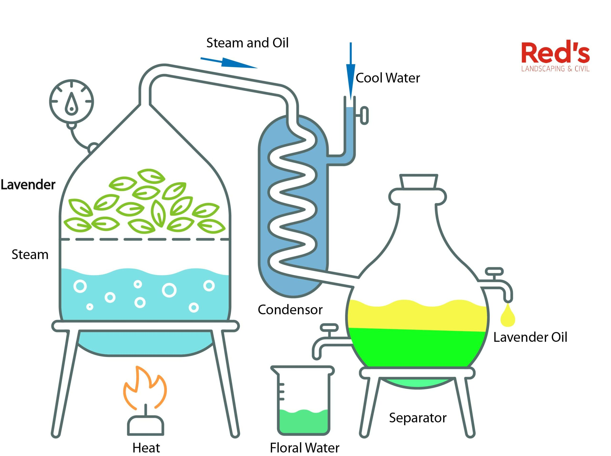 Lavender essential oil distillation process schematic