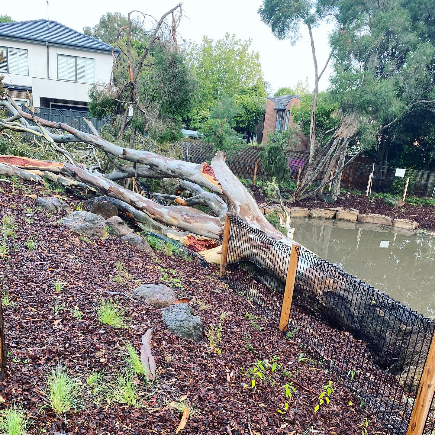 A fallen tree truck becomes new habitat by the urban wetlands of Balwyn Community Centre