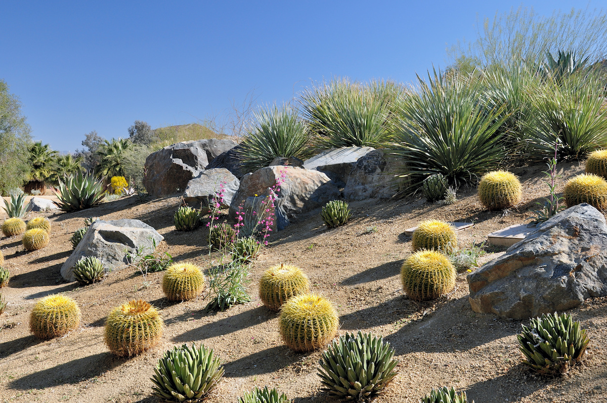 Palm Springs Landscaping Style with Barrel cacti and boulders.