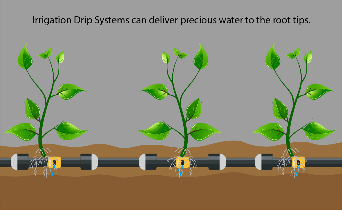 Drought tolerant landscaping - Irrigation drip system