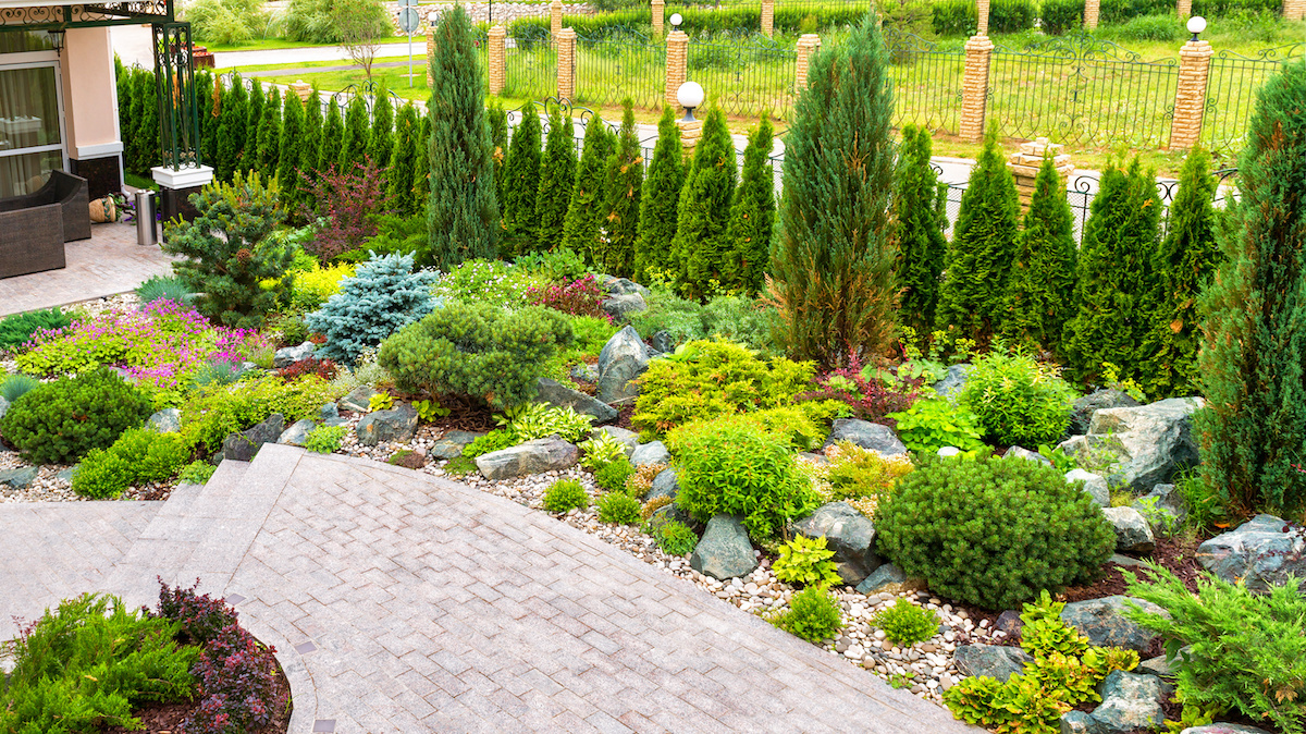 Landscape design with structural lime planting.