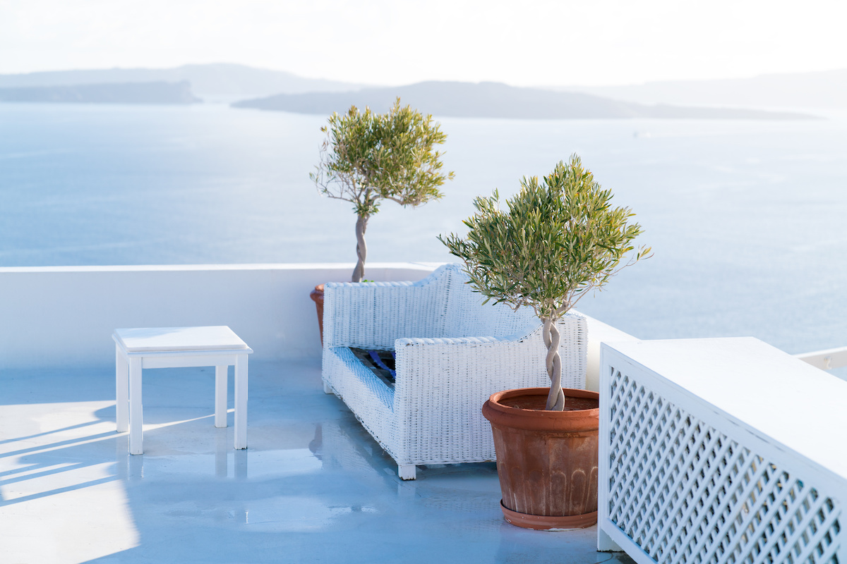 Landscaping with olives in pots on a white balcony.